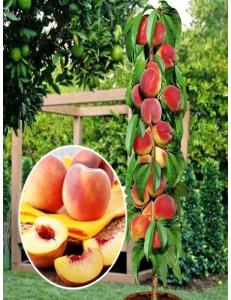 Колоновидный персик Медовый в Армавире