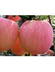 Яблоня Фуджи в Армавире